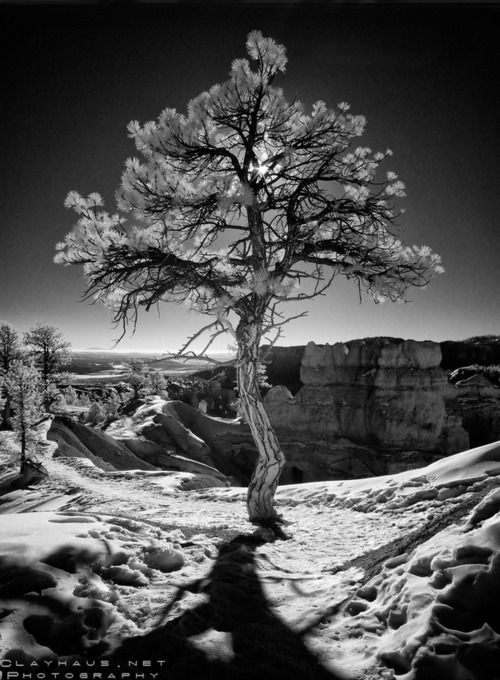 In a Different Light: The Colorado Plateau in Infrared on Photography Served (Jeff Clay)@Melanie Clark