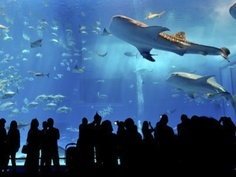 Aquarium: It's the largest marine park in Europe, with more than 800species in 70 tanks, in the Gulf of Genoa. Don't miss it!