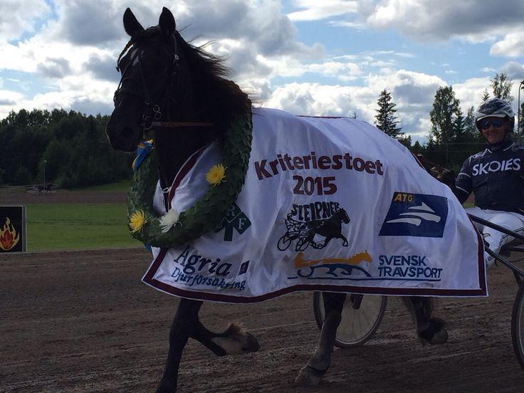 Aase ❤️født 2012❤️  MERITTER: 1.plass Svenske Kriteriestoet2015