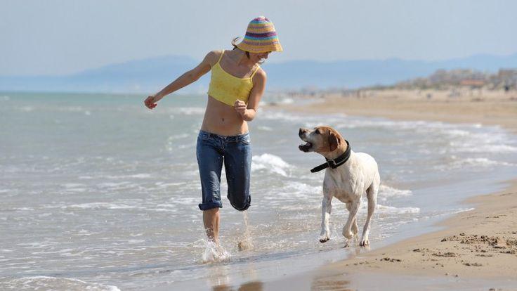 In spiaggia con il pet, ecco come comportarsi
