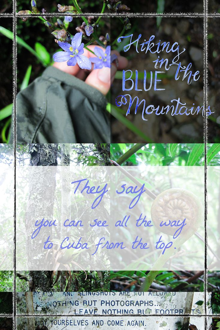 A hike to the top in Jamaica's Blue Mountains. Do you like to get out into the wild when you travel? What kind of hiker are you? Would you climb a mountain in the rain without the promise of a view after all your hard work?