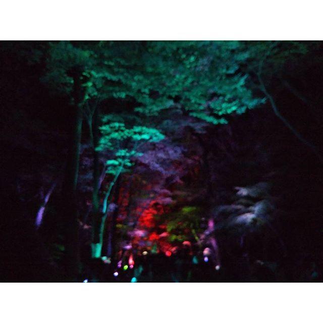 【sky.s_421】さんのInstagramをピンしています。 《下鴨神社、光の祭 #京都 #下鴨神社 #糺ノ森 #光 #カラフル #木 #森 #神秘的 #幻想的#夜の森 #写真好き #写真好きな人と繋がりたい》
