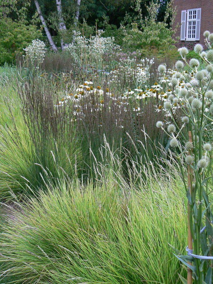 626 best ornamental grasses and landscape grasses images for Outdoor ornamental grasses
