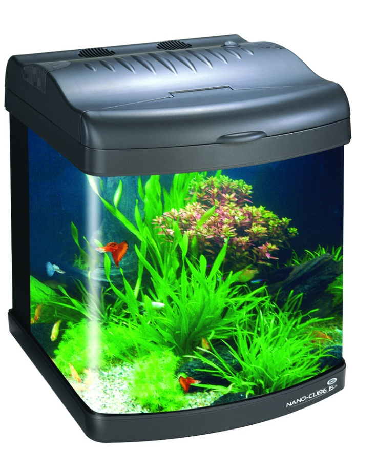 83 best images about fish tanks to admire ideas on for Nano aquarium fish