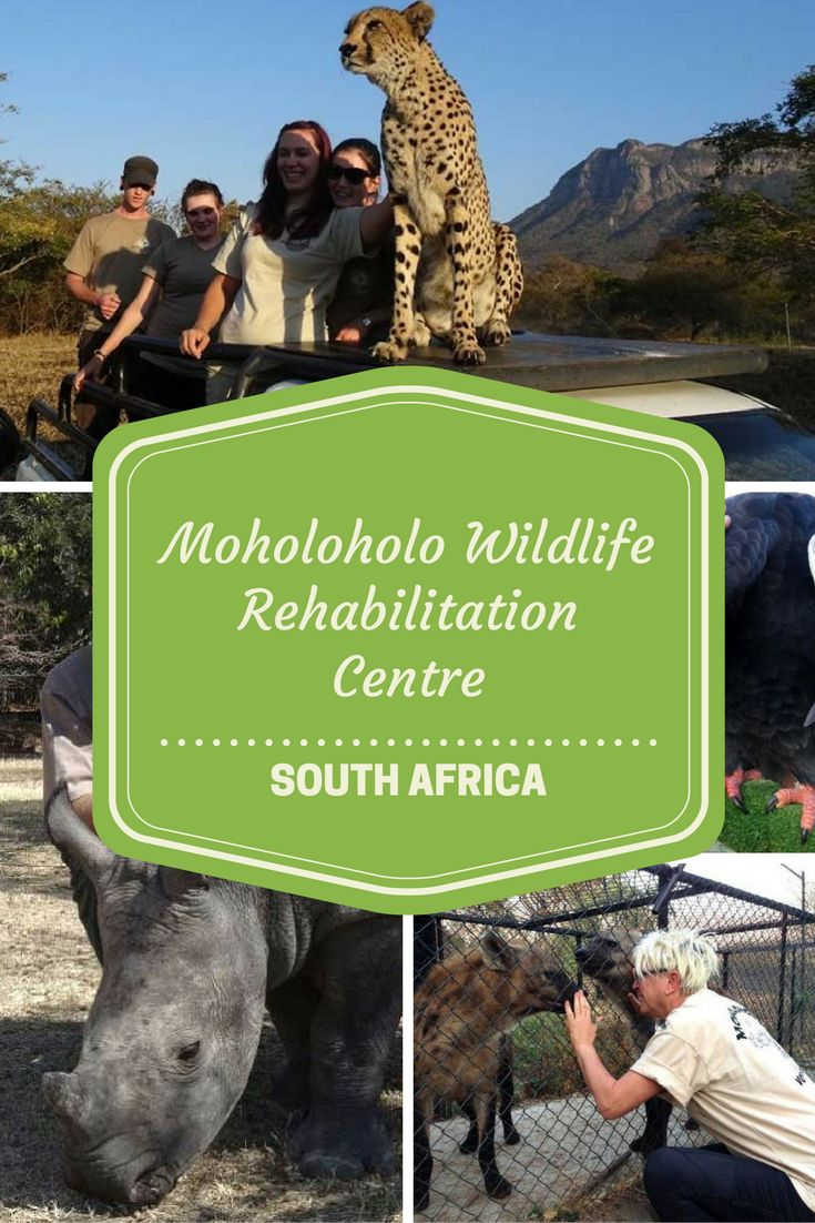 Moholoholo Wildlife Rehabilitation Centre. We spent a fortnight at Moholoholo Wildlife Rehabilitation Centre in the northern province of South Africa, a 45-minute drive from Hoedspruit.