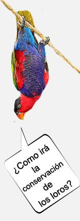 Especies de loros, informacion de papagayos, psittacidae y cacatuidae.