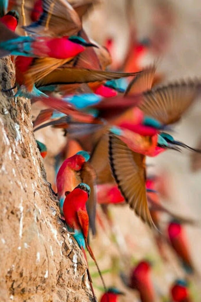 146 Best Images About Most Beautiful Colorful Photography