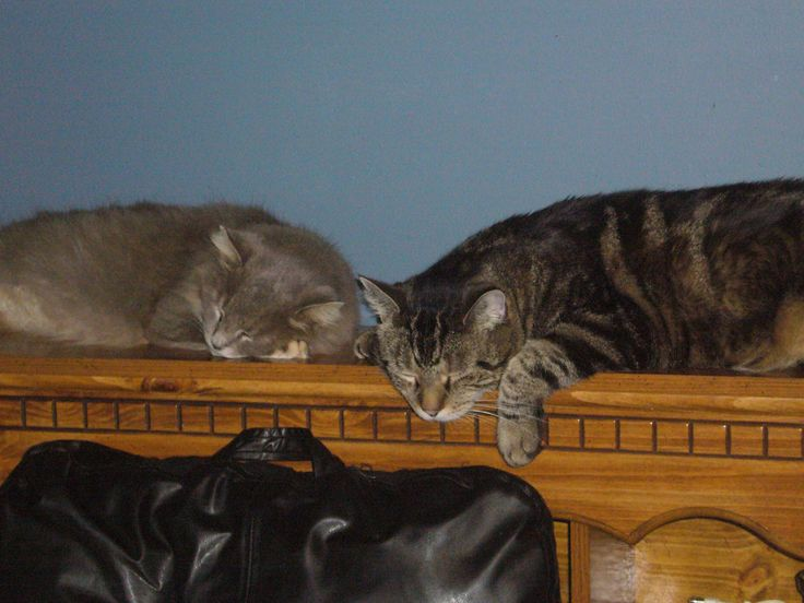 Baby and Guy sleeping together.  They do not do this anymore.  Hehe.