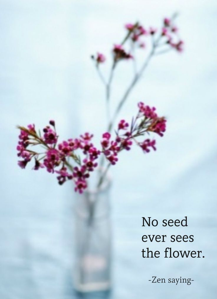 Draw & Wings. - No seed ever sees the flower (Zen saying) flower...