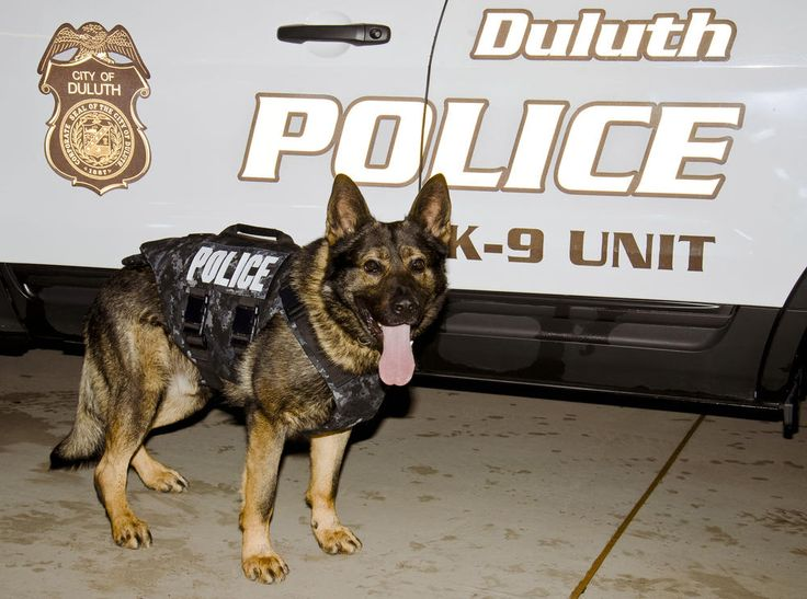 Duluth Police Department K9 Kobra with his new protective vest, donated by the nonprofit group Vested Interest in K9s. (Photo courtesy of Duluth police)