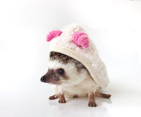 Sheep Costume - Hedgehog Costume – Squirrel Costume - Small Rat Costume…