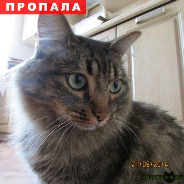 Пропал кот г.Уфа http://poiskzoo.ru/board/read30498.html  POISKZOO.RU/30498 .. сентября в районе речной переправы Трамплин пропал домашний кот Кеша. Возможно поднялся в город. Окрас серый, густошерстный, c редкими пятнами на боках. Кто видел прошу сообщить по тел.   РЕПОСТ! @POISKZOO2 #POISKZOO.RU #Пропала #кошка #Пропала_кошка #ПропалаКошка #Уфа