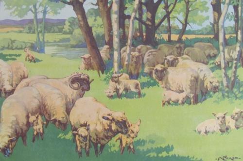 Vintage Schoolroom Poster - Sheep & Lambs