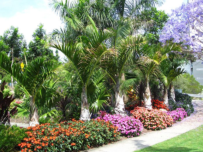 22 best images about my tropical garden on pinterest for Garden design with palms
