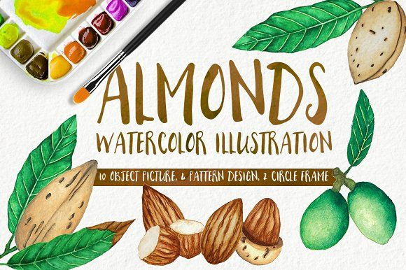 Almonds Watercolors Illustration by andypray on @creativemarket