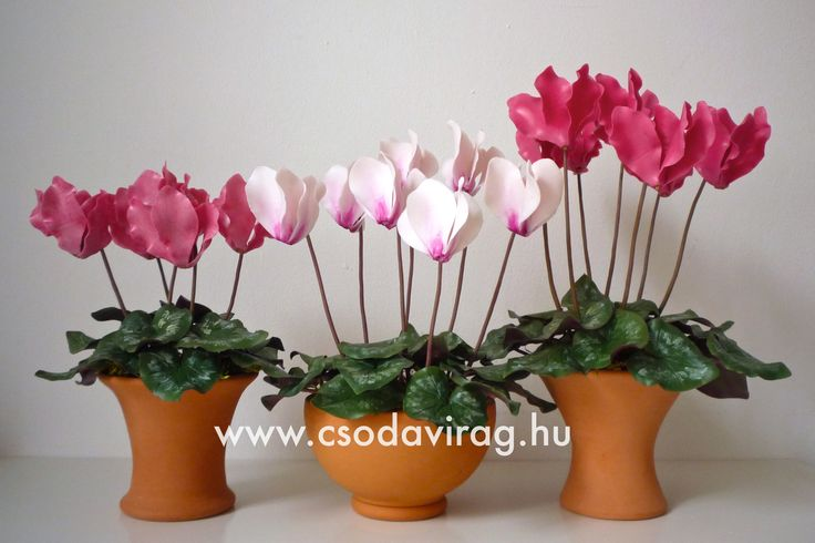 Cyclamen (Ciklámen) - My clay flower https://www.facebook.com/Csodavirag
