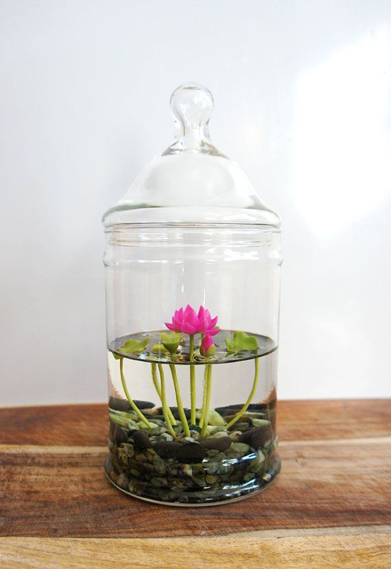 THIS ITEM IS RESERVED FOR MK. PLEASE DO NOT PURCHASE IF YOU ARE NOT HER. THANKS!! Tiny Pink Lotus Water Lily Terrarium in Glass Vase - TRULY ONE OF A KIND! A tiny 3″ bright pink Lotus (water lily) with little lilypads, each piece hand sculpted of the finest air dry clay, encased in a 9″ tall (with lid) repurposed glass terrarium. The lotus is floating atop faux water (gel-like resin) and growing from a bed of dark & swampy stones. This would be a lovely little desktop water garden! D...
