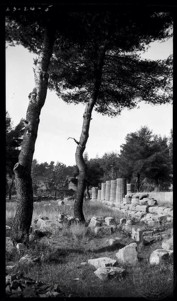 Olympia. Heraeum columns. Dorothy Burr Thompson Greece 1923