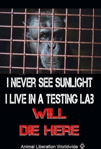 how to help stop animal testing
