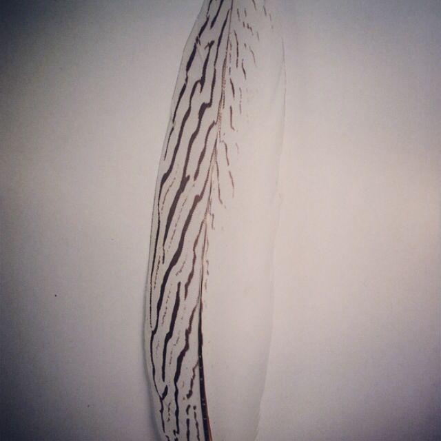 Plumas de faisán blanca, ¿eres capaz de hacer un tocado? #tocados #materialesparatocados #plumas #plumasfaisan #plumasparatocados #lacasadeltocado #materialdetocado http://www.lacasadeltocado.net/tienda-online/plumas/faisan/plata/pluma-de-faisan-plata-25-30cm.html