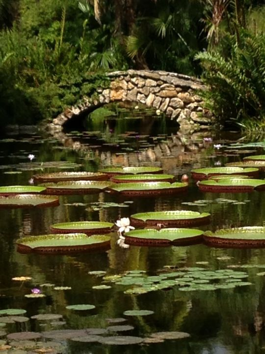 McKee Botanical Gardens In Vero Beach, FL: Thank You For Liking And Sharing  My