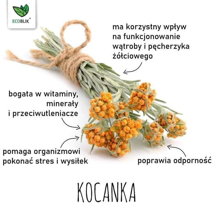 Pin By Zofia Kadziela On Ziola Vegetables Food Corn