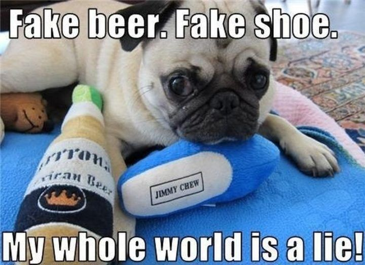 101 Lovable Pug Memes That Are Too Puggin Cute Cute Pugs Funny