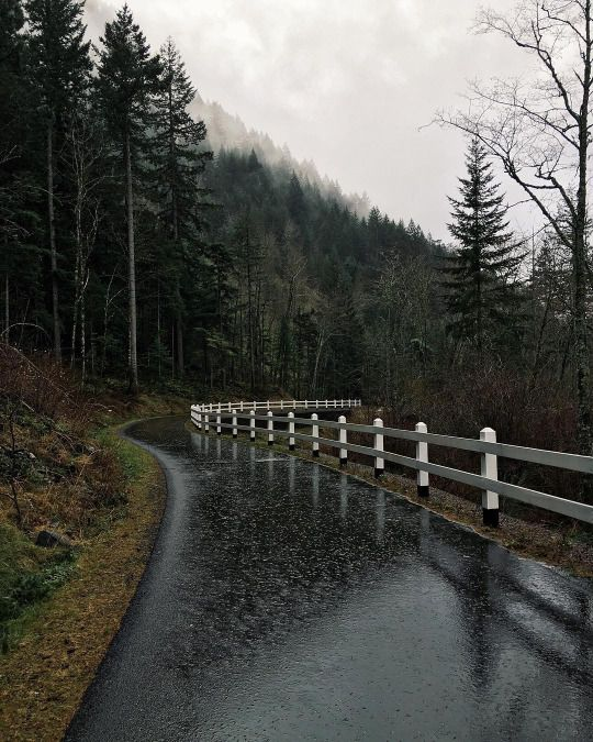 Rainy weather makes leafy strown roads very slippery!  You must drive carefully!  :)