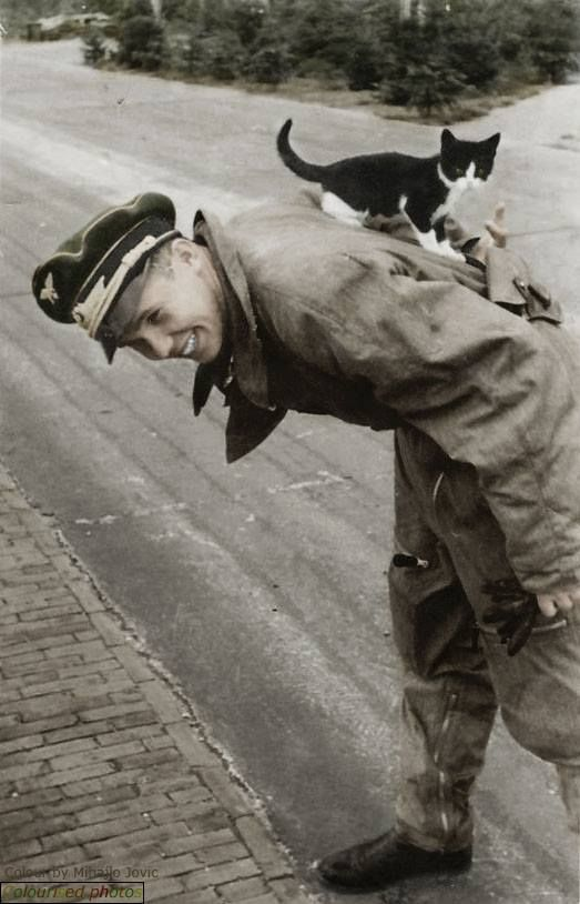 Luftwaffe's soldier with a cat.