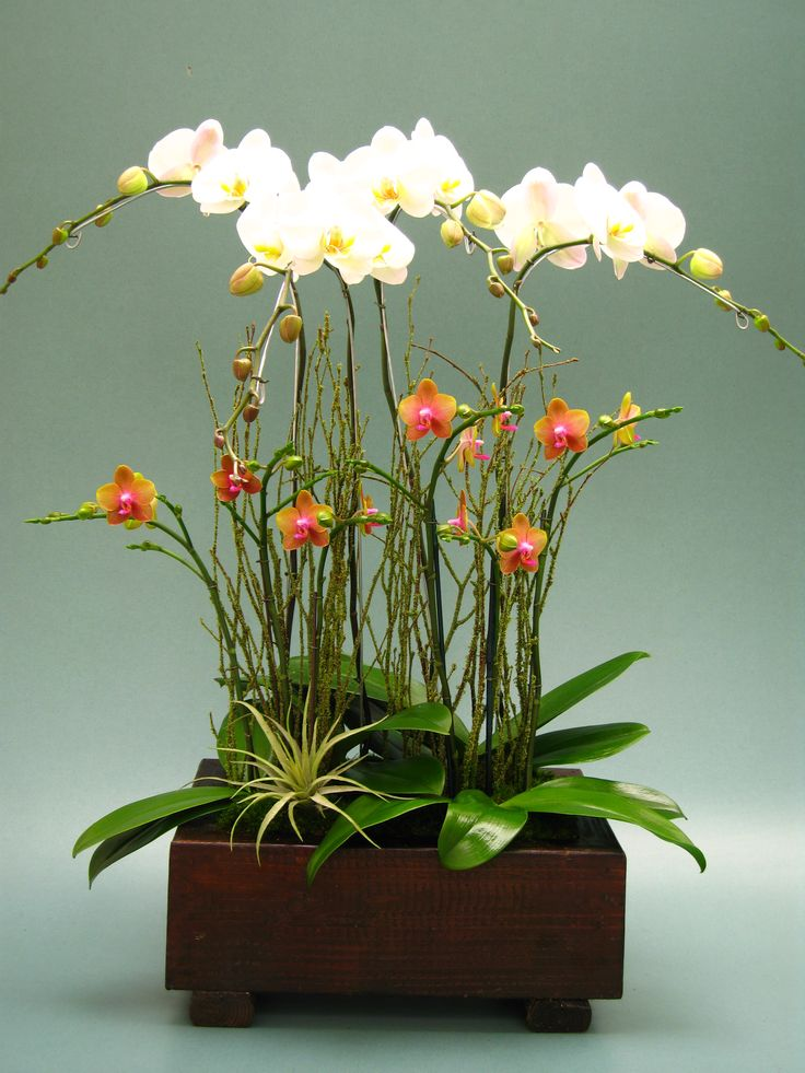 Orchid arrangement our orchids pinterest ikebana i love and love it - Orchideen arrangement ...
