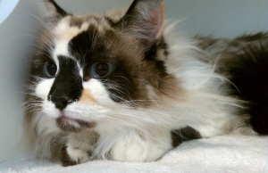 Adopt Confetti Girl On Kitty Animals Creatures