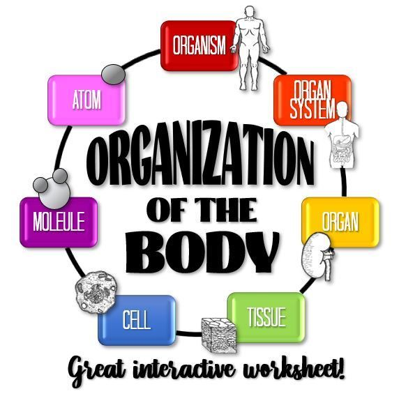 Organization Of The Body Worksheet Distance Learning Option Levels Of Organization Biology Biology Activity Human Body Activities