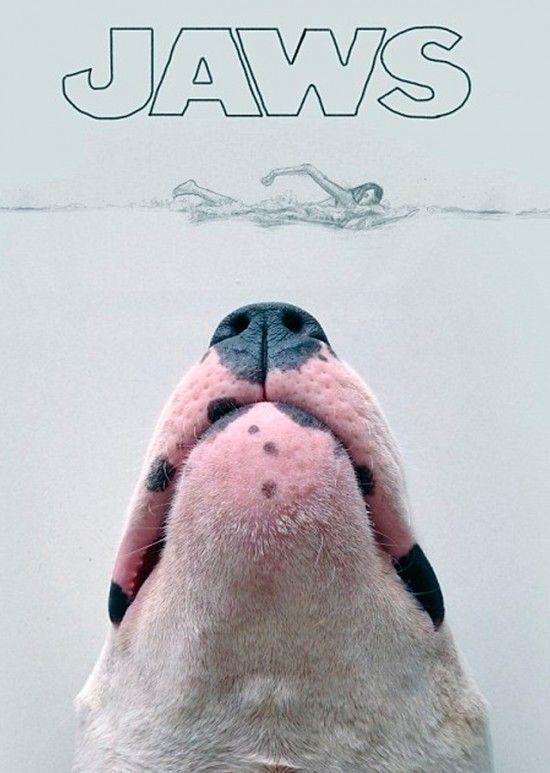 perro-bull-terrier-dibujos-bonitos