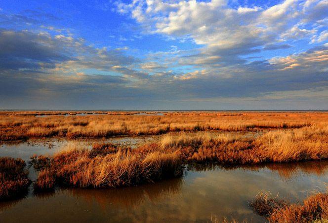 Diaccia Botrona Nature Reserve