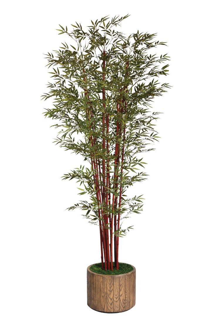 Laura Ashley Home Tall Harvest Bamboo Tree In Planter Good Ideas