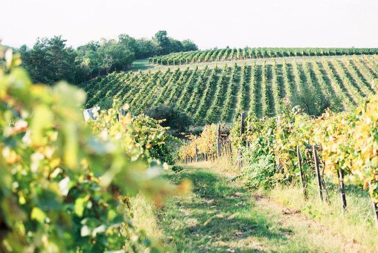 Beautiful vineyard wedding venue