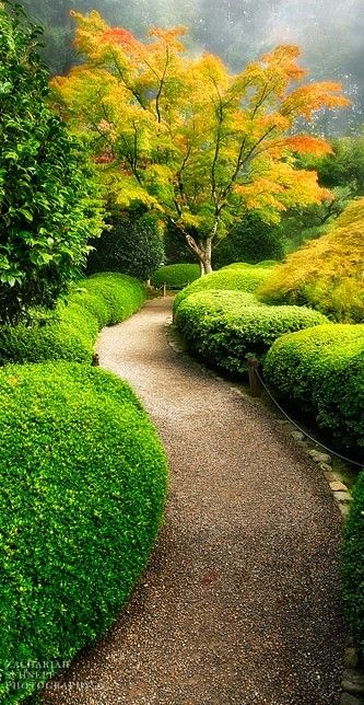 The Japanese Garden at Washington Park in the west hills of Portland, Oregon • Zack Schnepf Photography