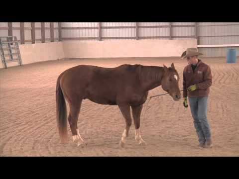 Teaching Beginning Liberty Work - Advantage Horsemanship TV - YouTube