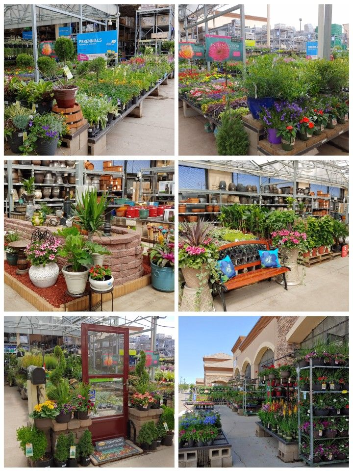 Lots Of Color Ready For A Great Weekend With Images Garden