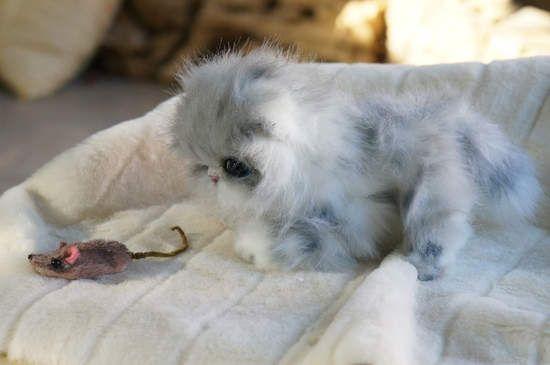 Tom kitten By Tsybina Natalia. - Bear Pile