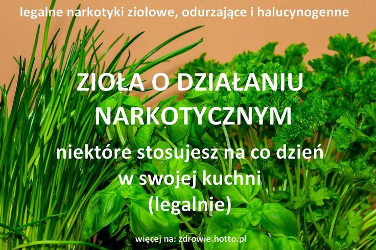 Tyle szumu o konopie a tymczasem zupełnie legalne są w Polsce zioła i rośliny o działaniu narkotycznym (odurzającym i halucogennym). Niektóre z nich wyko