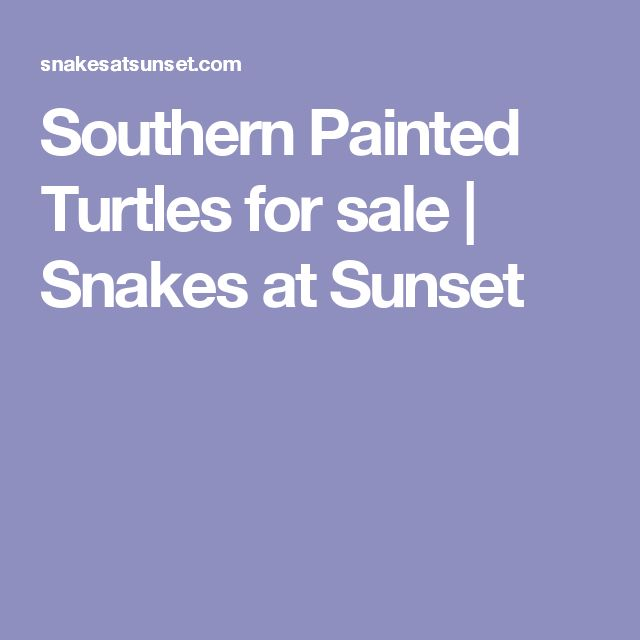Southern Painted Turtles for sale | Snakes at Sunset
