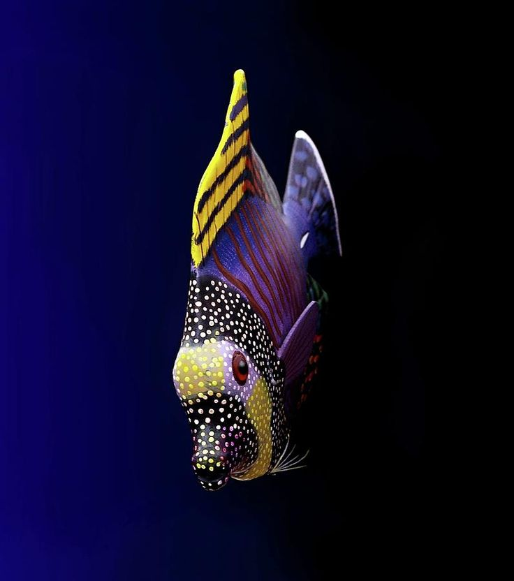 Tropical Fish http://japan-russia.jimdo.com/%D0%B6%D1%83%D1%80%D0%BD%D0%B0%D0%BB-%D0%BA%D1%80%D0%B0%D1%81%D0%BE%D1%82%D0%B0-%D0%B8-%D0%B7%D0%B4%D0%BE%D1%80%D0%BE%D0%B2%D1%8C%D0%B5-allure-style-allsaints-%D0%BC%D0%BE%D1%81%D0%BA%D0%B2%D0%B0-%D1%80%D0%BE%D1%81%D1%81%D0%B8%D1%8F/