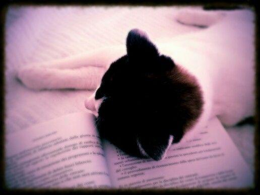 #Goku #cat #sleep #book #gatto #libro #dormire