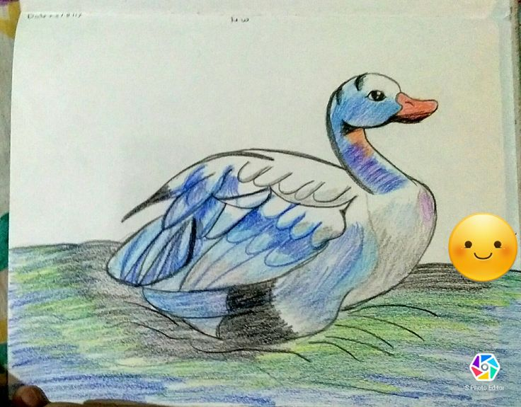 Duck from somya