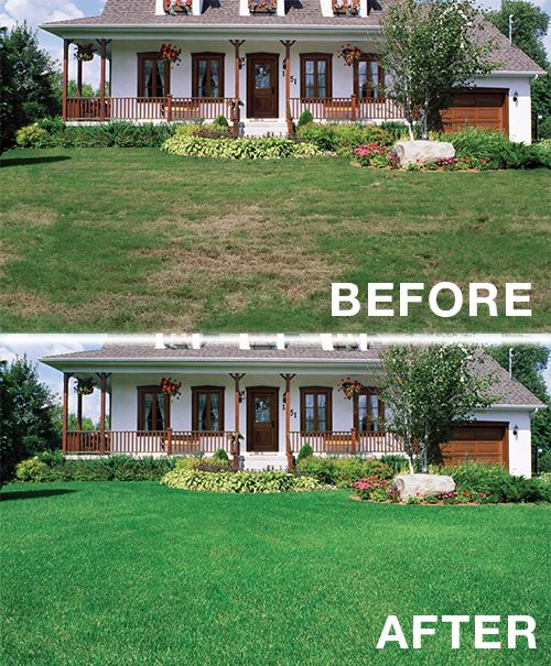 15 best images about lawn makeovers on pinterest gardens for Ideas for landscaping large areas