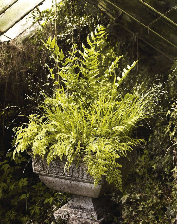Dryopteris clintoniana, Melica altissima 'Alba' & Adiantum venustum; Gardens Illustrated, May 2016
