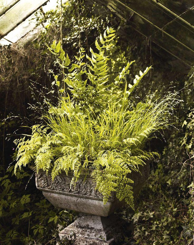 Dryopteris clintoniana, Melica altissima 'Alba' & Adiantum venustum; Gardens Illustrated, May 2016
