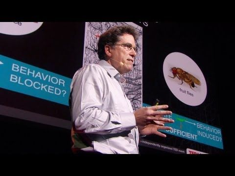 Modern psychiatric drugs treat the chemistry of the whole brain, but neurobiologist David Anderson believes in a more nuanced view of how the brain functions. He illuminates new research that could lead to targeted psychiatric medications -- that work better and avoid side effects. How's he doing it? For a start, by making a bunch of fruit flies...