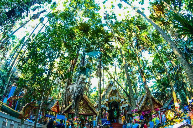 #ancient #asia #asian #background #buddhism #buddhist #chanod #chanot #culture #decoration #forest #holiday #holy #island #kamchanod #kham #kham chanot island #light #livistona #naga #northeastern #old #outdoor #pa #palm